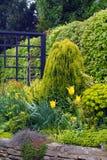 Spring garden border. With a yellow theme stock photography