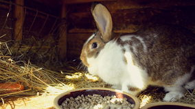 Spring garden - Bunny in a hutch. Life in spring garden. Video of bunny in a hutch stock video footage