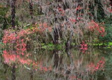 Spring Garden Charleston South Carolina SC Stock Images