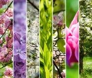 Spring garden collage Royalty Free Stock Photos