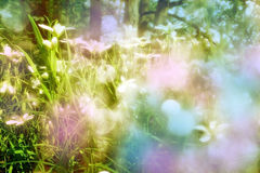 Spring in the garden - colored vintage art picture Stock Photography