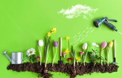 Spring garden concept. Spring flower bed garden with clouds, light bulb as the sun, and hose pipe with a sketch of water being sprayed Stock Image