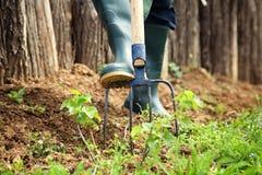 Spring garden concept. Royalty Free Stock Photos