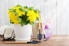 Spring in the garden concept Stock Image