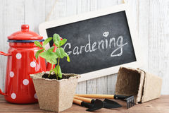 Spring in the garden concept Royalty Free Stock Image