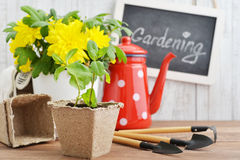Spring in the garden concept Royalty Free Stock Images