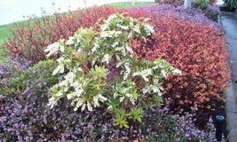 Spring Garden Stock Photos