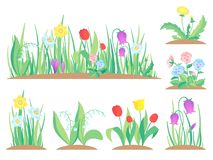 Spring garden flowers. Early flower, colorful gardens plants and flowering plant gardening flat vector illustration royalty free illustration