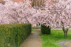 Spring in the garden. Stock Image