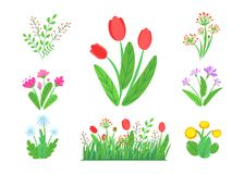Free Spring Garden Flowers Vector With Blooming Grass Border. Simple Plant Bouquet Illustration. Springtime Nature Elements Stock Photography - 137434722