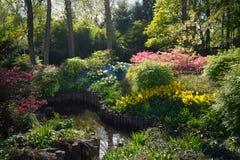 Spring Garden Forest 1 stock image