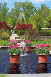 Red Tulips in Formal Garden Royalty Free Stock Image