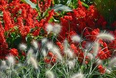Spring Garden Fountain Grass Stock Photography