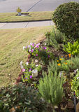 Spring garden in front yard. Beautiful spring garden in front yard of house, TX USA Royalty Free Stock Photo