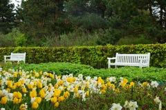 Spring garden Keukenhof, Holland Royalty Free Stock Image