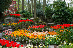 Spring garden Keukenhof, Holland Stock Photography