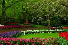 Spring garden in Keukenhof, Holland. Colorful spring lawn with mix of flowers  in  garden Keukenhof, Holland Royalty Free Stock Image
