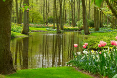 Spring garden Keukenhof, Netherlands Stock Photos