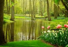 Spring garden Keukenhof, Netherlands Stock Image