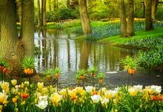 Spring garden Keukenhof, Netherlands. Colorful river landscape  in dutch garden 'Keukenhof', Netherlands, toned Stock Images