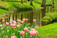 Spring garden Keukenhof, Netherlands Royalty Free Stock Photos