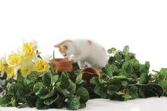 Spring Garden Kitty Royalty Free Stock Image