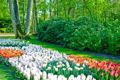 Spring garden landscape. Garden landscape with blooming spring flowers Royalty Free Stock Photography