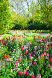 Spring garden landscape Royalty Free Stock Photo