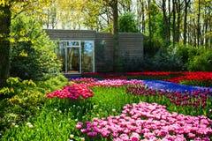 Spring garden landscape Royalty Free Stock Image