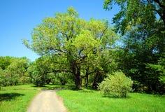 Spring garden landscape stock photos