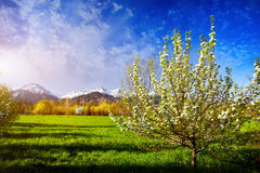 Spring garden and mountains Royalty Free Stock Images