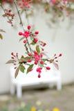 Spring in the garden. Stock Photo