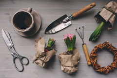 Spring garden preparations. Hyacinth flowers and vintage tools on table, top view Stock Image