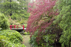 Spring garden after rain. Beautiful plants in spring in Kubota Garden Seattle Royalty Free Stock Images