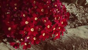 Spring garden red flower Royalty Free Stock Images