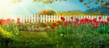 Spring garden. Red tulips in garden royalty free stock photos