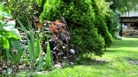 Spring garden. Garden with spring seasonal decorative flowers swaying in the wind. Garden view during sunny day stock footage