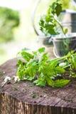 Garden seedlings on wood Stock Photos