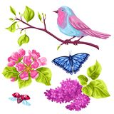 Spring garden set of objects. Natural illustration with blossom flower, robin birdie and butterfly.  Royalty Free Stock Photos