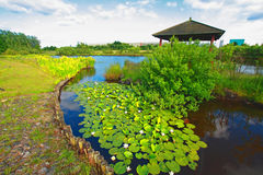 Spring garden with water lilies Royalty Free Stock Images