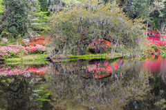 Spring Garden Water Reflections royalty free stock photo