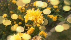Spring garden yellow flower Stock Image