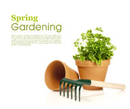 Spring gardening Royalty Free Stock Photography