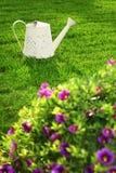 Spring gardening Stock Photography