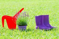 Spring gardening background with red watering can, purple rubber rain boots and lavender flower pot on the grass. Spring gardening background with red watering royalty free stock photos