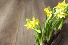Spring gardening background Stock Image