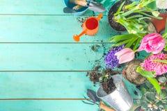 Free Spring Gardening Concept Stock Photo - 215512250