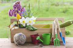 Spring and gardening concept. Garden tools and spring flowers outdoors stock images