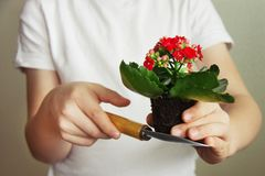 Spring gardening concept. Spring planting activity royalty free stock photo
