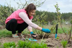 Spring gardening, female gardener working in gloves with garden tools fertilizes the soil with mineral granulated fertilizers royalty free stock photos